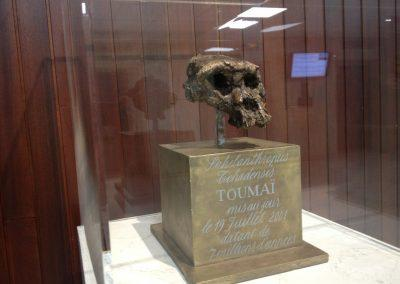 Toumaï skull model